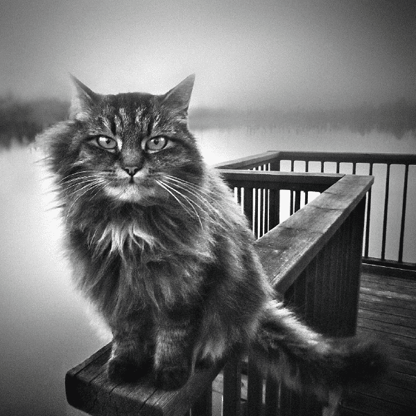 The Cat of Lake